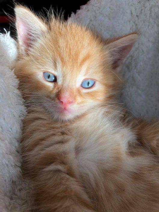 http://kattenacademie.nl/kittens-flessen-vanaf-1-dag-oud/